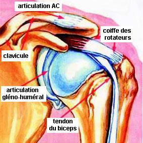 anatomy_rc